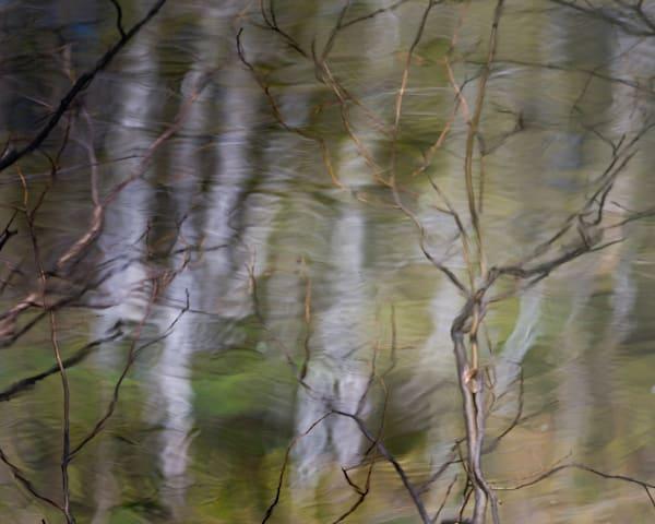 Branch Impression 2 Photography Art | matt lancaster art