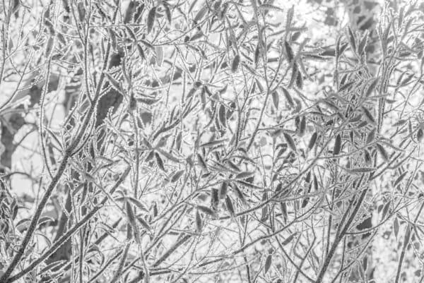 In Sharp Detail Photography Art | matt lancaster art