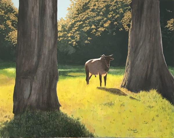 Young Bull In Golden Light Art | David R. Prentice
