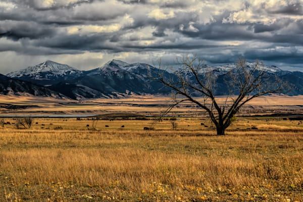 Lone And Fan From North Meadow Photography Art | Monty Orr Photography