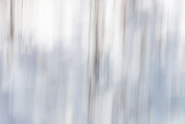 Winter Forest Vision Photography Art   matt lancaster art