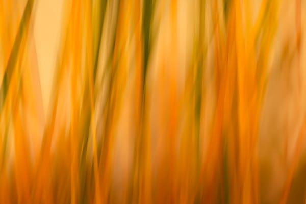 Flames Of Grass 1 Photography Art   matt lancaster art