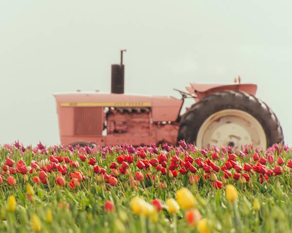 Tulip Tractor 2018