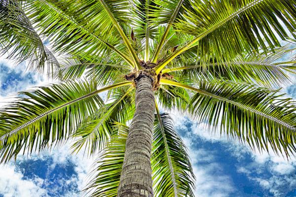 Miami Palm Art | Frasier Photography