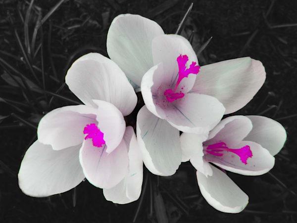 White  Trio Art | Vesna Longton Art