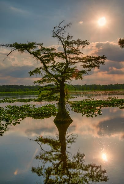 Sunset Over Reelfoot 4849