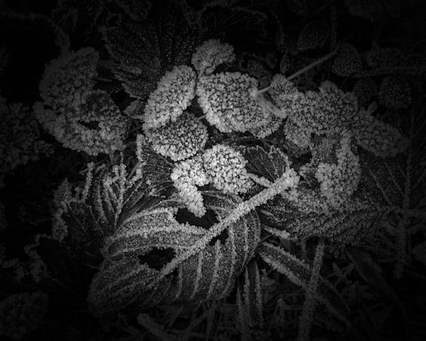 Crystallized Leaves Photography Art | matt lancaster art