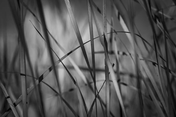 Grass Web Photography Art | matt lancaster art