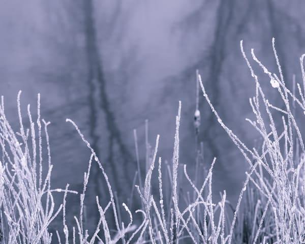 Hoar Frost Blades Photography Art | matt lancaster art