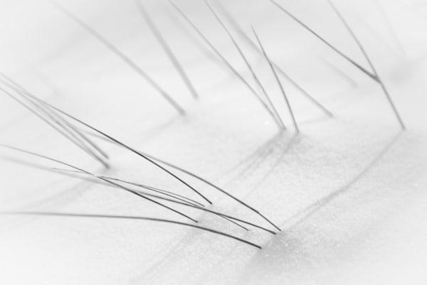 Six Blades Photography Art | matt lancaster art