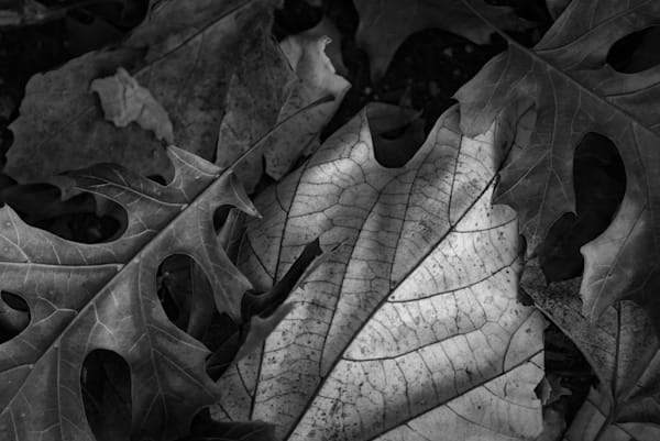 Ordinary Leaves At Midday On A Busy Street 1 Photography Art | matt lancaster art