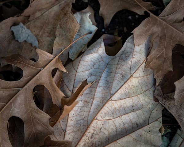 Ordinary Leaves At Midday On A Busy Street 2 Photography Art | matt lancaster art