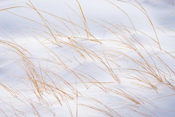 Blades Through The Blanket Photography Art | matt lancaster art