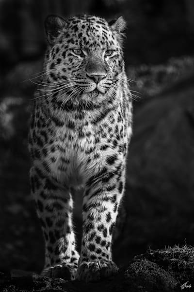 Proud Hunter Art | TG Photo