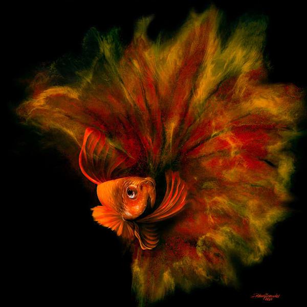 Betta Fish Red (Original) Art | Patrick Bezalel Pte Ltd