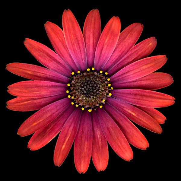 La Fleur  I, by Laura Grisamore