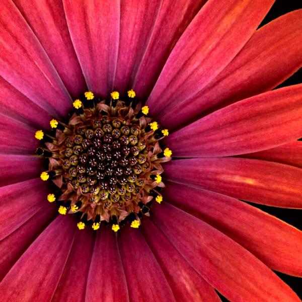 La Fleur II, by  Laura Grisamore