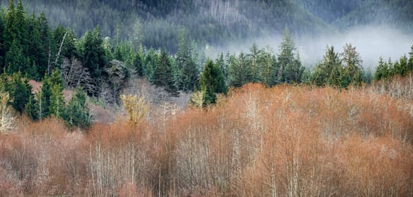 Fog Clearing On The Hoh River Art | marcyephotography