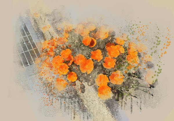 Poppies Springing From The Curb Art | Art from the Soul