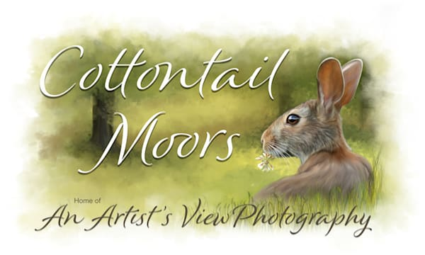 Cottontail Moors Photography Art | An Artist's View Photography