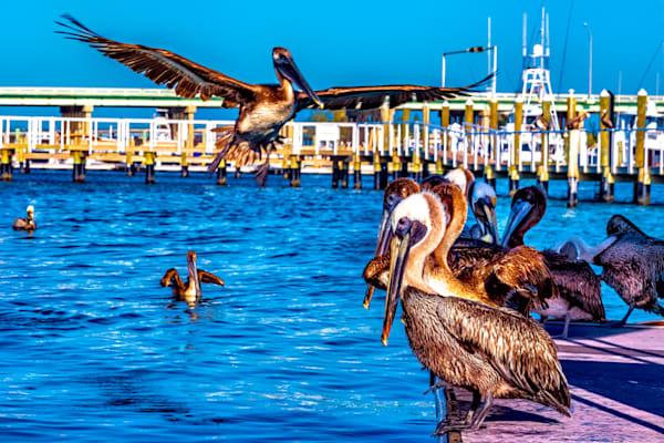 Pelican Playground
