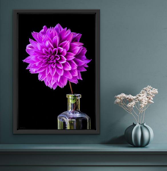 The Purple Prince Dahlia | LUMINOS ART EDITIONS