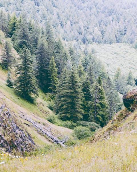 Tree Valley 2019