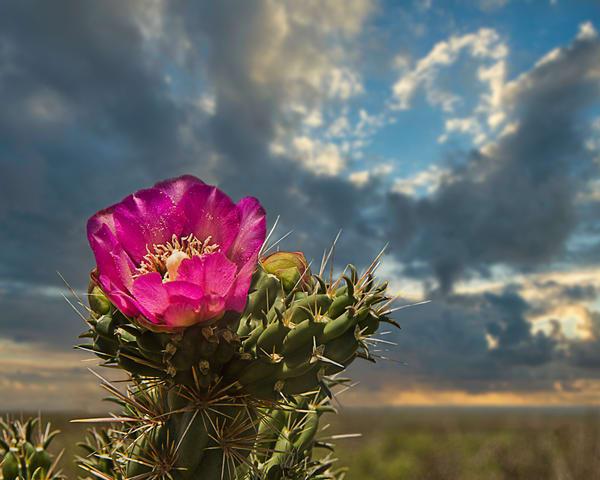 Desert Glory Art | Jim Livingston Art