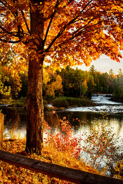Golden Tones Lower Falls Autumn