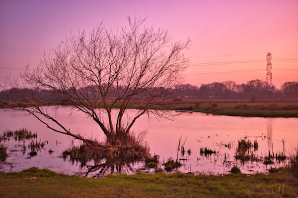 Golden Glow On Staines Moor Art   Martin Geddes Photography