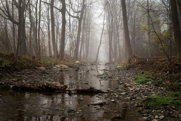 Misty Morning  Photography Art   Elizabeth Stanton Photography