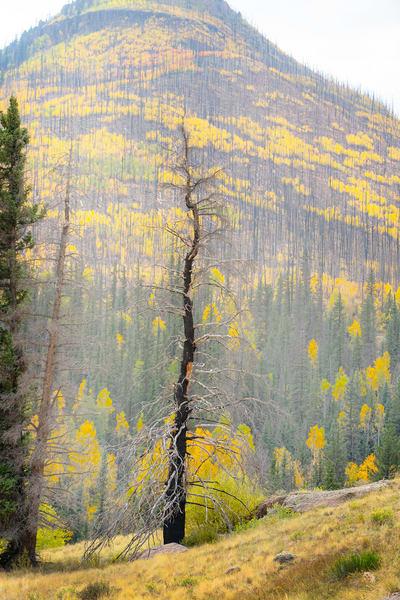 Trees and Close-ups