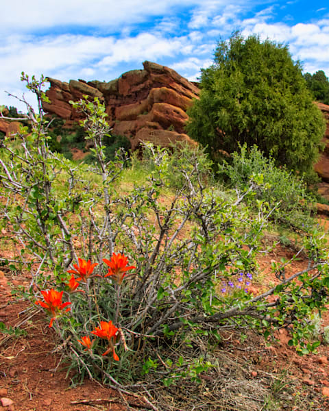 Orange Flowers in Red Rock Canyon