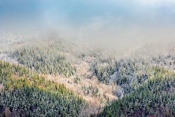 Misty Trees Acme Area Art   lisaabbott