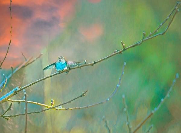 Fa Photo Painting Hummingbird Art   lisaabbott