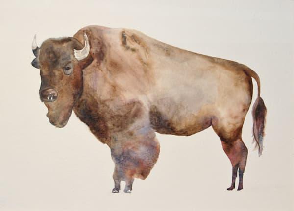 Watercolor Buffalo / Bison