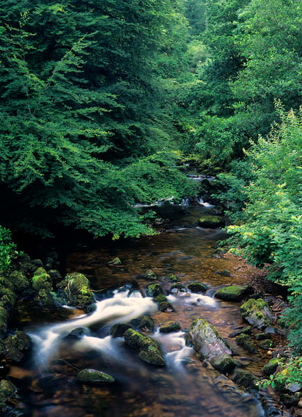 An Ireland Creek Photography Art | Craig Primas Photography