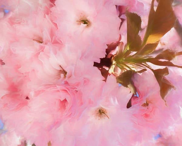 Cherry Blossom Cloud #2