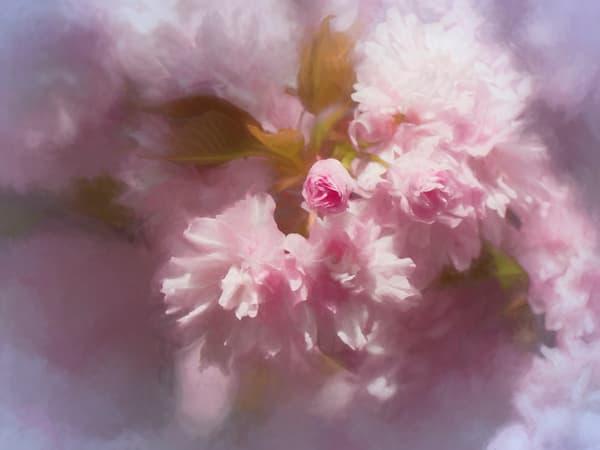 Cherry Blossom Cloud