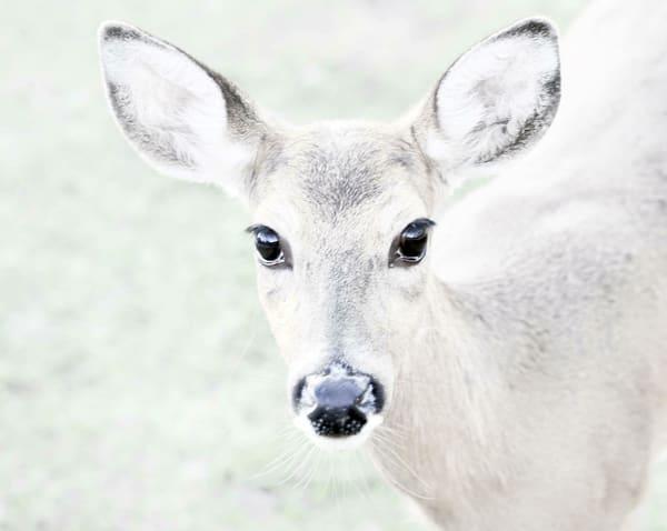 Deer Florida Art | Frasier Photography