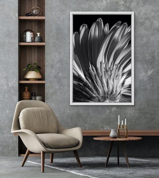Flowerbacks   The Gerber Daisy | LUMINOS ART EDITIONS
