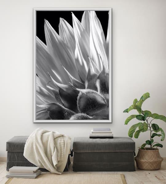 Flowerbacks   The Sunflower | LUMINOS ART EDITIONS