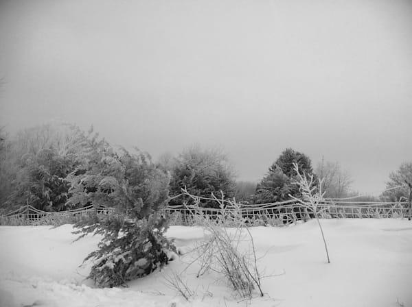 Winter Frost Art | Sunrise Galleries
