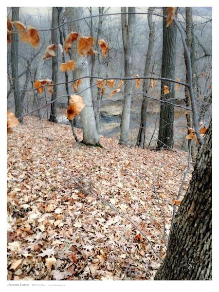 Autumn Leaves Art | Sunrise Galleries