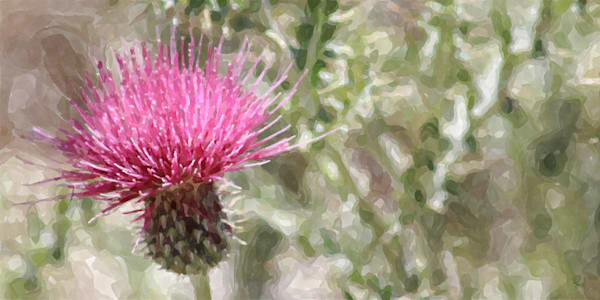 Cirsium vulgare Watercolor: Shop prints: Lion's Gate Photography