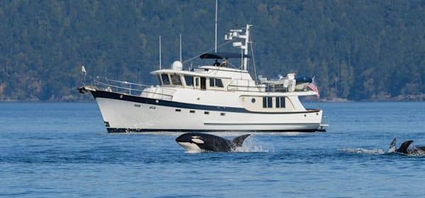 Bigg's Killer Whale T90 C With Mv Undaunted Art | Friday Harbor Atelier