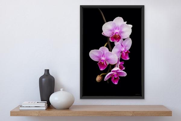 Orchidaceae No.19 | LUMINOS ART EDITIONS