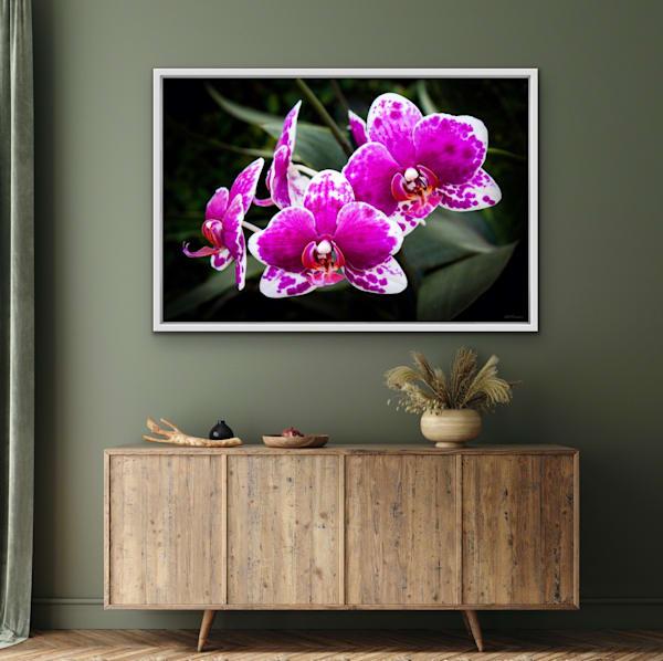 Orchidaceae No.31 | LUMINOS ART EDITIONS