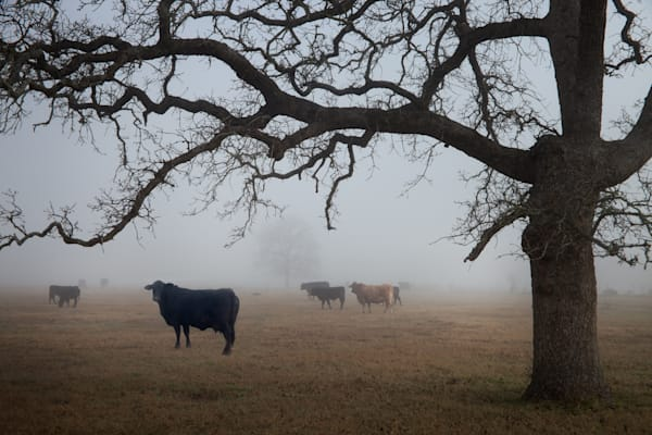 Neighbors, Near Snook, Texas Photography Art   Rick Gardner Photography