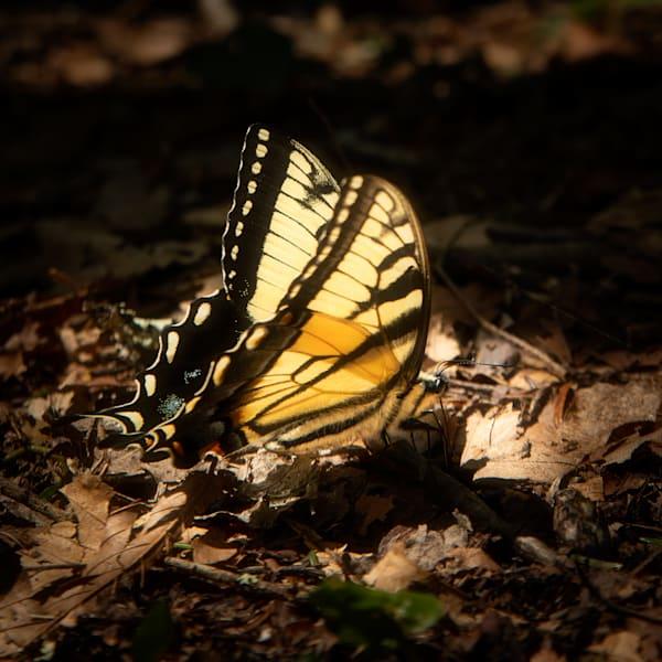 Beautiful Yellow Butterfly Print